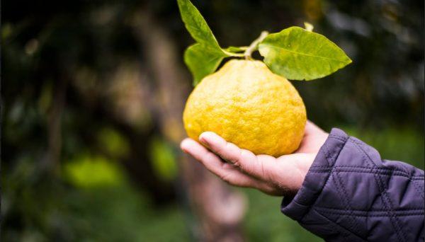 Il frutto di Bergamotto
