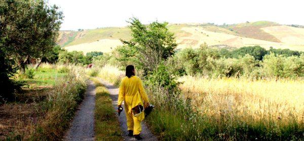 Honey in Calabria