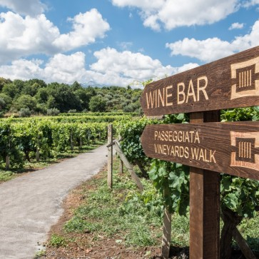 wine experience etna___