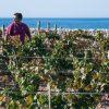 wine tasting sicilia