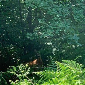 Im Wald übernachten Cormons