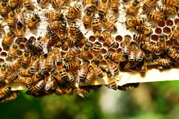 adopting a beehive